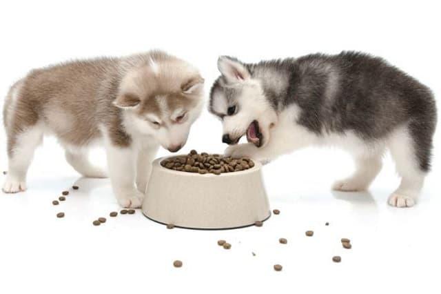 Vinpetcom – đơn vị cung cấp thức ăn cho chó smartheart uy tín